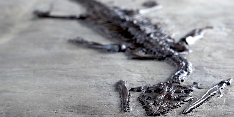 UNESCO – The Fossils of Monte San Giorgio